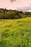 色的现有量例证做本质夏天 日落的风景草甸 免版税库存图片