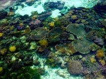 色的珊瑚、鱼和海洋生物在热带海岛中透明的水域  库存图片