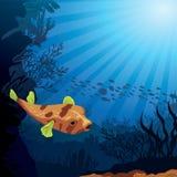 色的珊瑚礁和吹风者 免版税库存图片