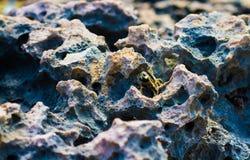 色的石头 sandstone utah view 库存照片