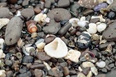 色的石头壳和海草在岸 免版税图库摄影
