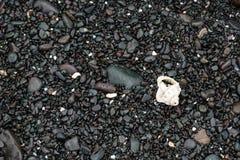 色的石头壳和海草在岸 库存图片