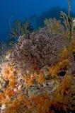 色的礁石,印度洋,马尔代夫 图库摄影