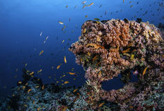 色的礁石 库存照片
