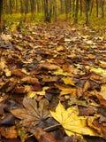 色的秋天叶子 免版税图库摄影