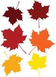 色的秋天叶子 库存例证