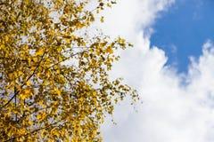 黄色的秋天和红色离开反对蓝天 库存图片