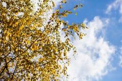 黄色的秋天和红色离开反对蓝天 免版税库存照片