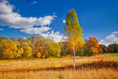 色的秋天 免版税库存图片