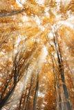 色的结构树 图库摄影