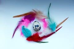 色的羽毛抽象框架  库存照片