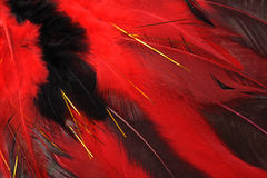 色的羽毛 免版税图库摄影