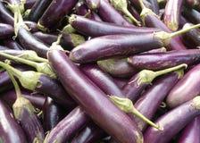 紫色的茄子 库存照片