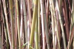 色的藤茎 免版税图库摄影