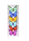 色的蝴蝶收藏 免版税图库摄影