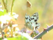 色的蝴蝶立场在植物中 库存图片
