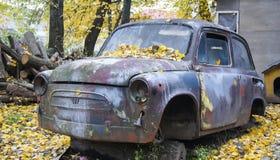 黄色的被放弃的汽车,秋天雨林 库存图片