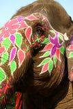 色的详细资料大象题头 图库摄影