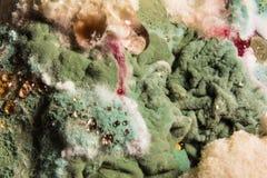 色的霉菌的密集的形成在被损坏的食物,抽象背景的 库存图片