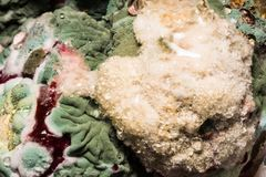色的霉菌的密集的形成在被损坏的食物,抽象背景的 免版税库存图片