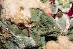 色的霉菌的密集的形成在被损坏的食物,抽象背景的 免版税库存照片
