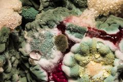 色的霉菌的密集的形成在被损坏的食物,抽象背景的 图库摄影