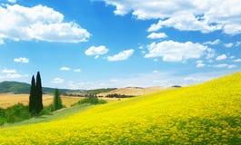 黄色的领域开花托斯卡纳 免版税库存图片
