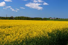 黄色的领域 免版税库存图片