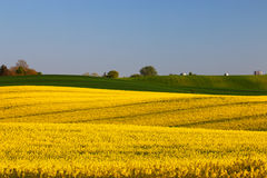 黄色的领域 免版税图库摄影
