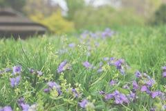 紫色的领域 库存照片