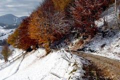 色的风景白色冬天 库存照片