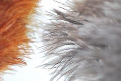 色的驼鸟羽毛喷粉器花束 免版税库存照片