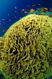 色的鱼红色礁石学校海运 免版税库存图片