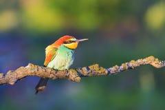 色的鸟在阳光下` s早晨光芒 免版税库存照片