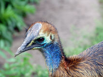 色的鸟面孔关闭  免版税图库摄影