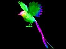 色的鸟 免版税库存图片