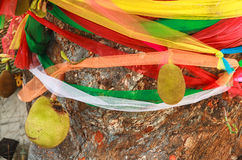 色的织品多 免版税库存照片