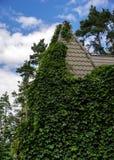 以绿色盖的乡间别墅离开植物 免版税库存图片
