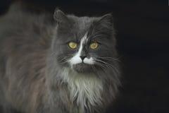 黄色目的猫 库存图片