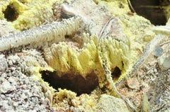 黄色硫磺水晶 库存照片