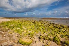 绿色礁石处于低潮中 免版税图库摄影