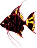 黑色神仙鱼 图库摄影