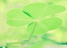 绿色秀丽在森林里 库存图片