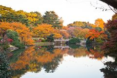 黄色秋叶,秋天颜色树 免版税图库摄影