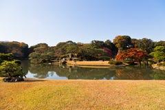 黄色秋叶,秋天颜色树 图库摄影