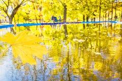 黄色秋天公园的叶子和反射 库存图片