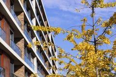 黄色秋天叶子,蓝天,私有公寓房 库存图片