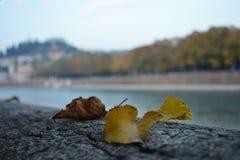 黄色秋天叶子细节  图库摄影