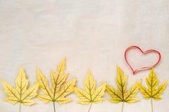 黄色秋天槭树在轻的背景离开和一个红色心脏概述 概念季节性分隔的白色 安置文本 库存照片