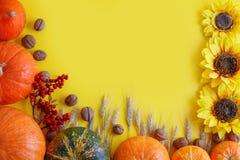 黄色秋天背景用南瓜和向日葵 库存图片